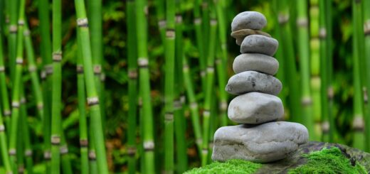 14th September: Mindfulness at RISC